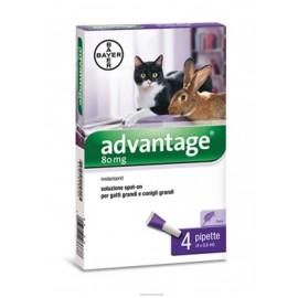 ADVANTAGE*4PIP 0,8ML GATTI SUP4K